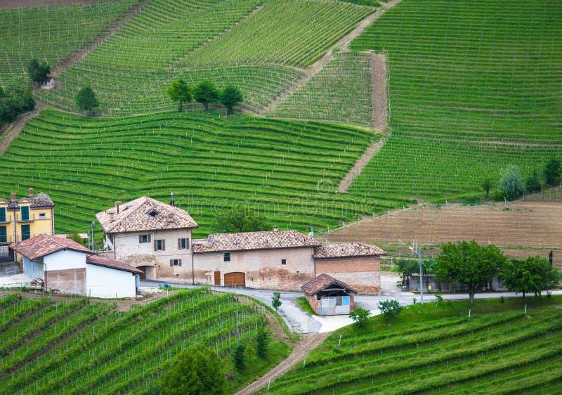 Αμπελώνες Langhe, Piedmont, περιοχή της ΟΥΝΕΣΚΟ στοκ εικόνα με δικαίωμα ελεύθερης χρήσης