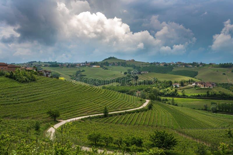 Αμπελώνες Langhe, Piedmont, περιοχή της ΟΥΝΕΣΚΟ στοκ φωτογραφίες