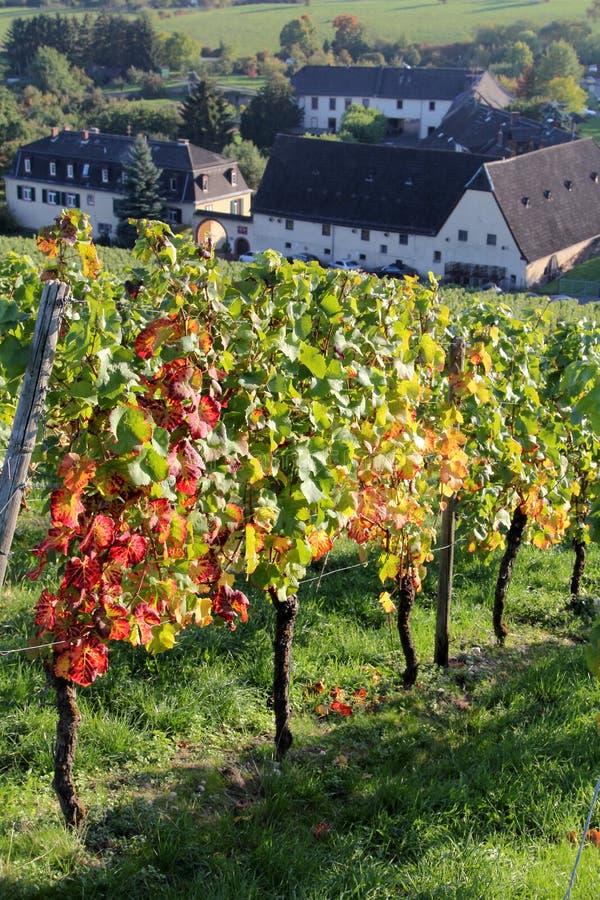 Αμπελώνες Rheingau στοκ εικόνες με δικαίωμα ελεύθερης χρήσης