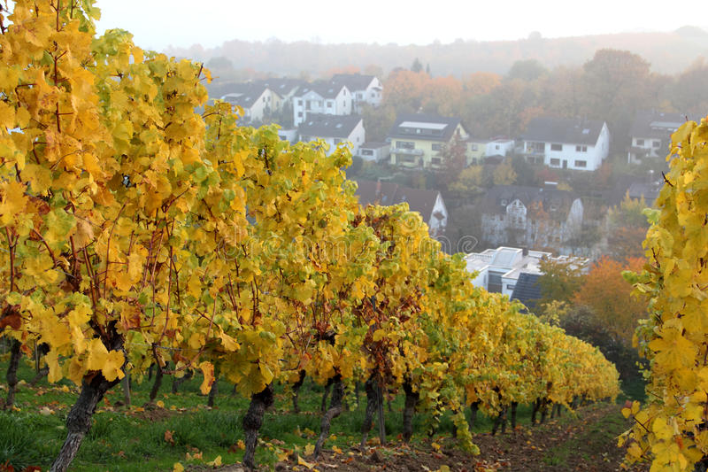 Αμπελώνες Rheingau στοκ φωτογραφία