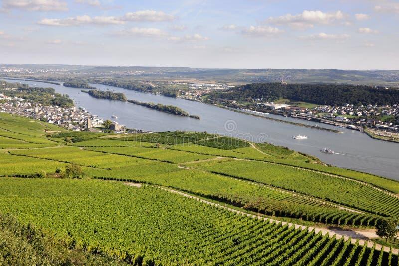 Αμπελώνες Riesling Rheingau στοκ εικόνα