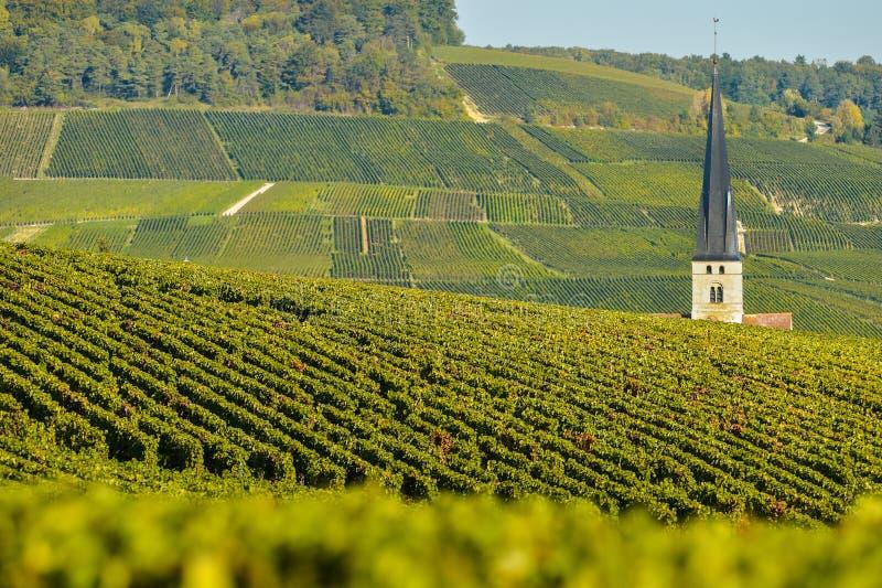 Αμπελώνες Sermiers CHAMPAGNE Marne στο τμήμα, Γαλλία στοκ εικόνες με δικαίωμα ελεύθερης χρήσης