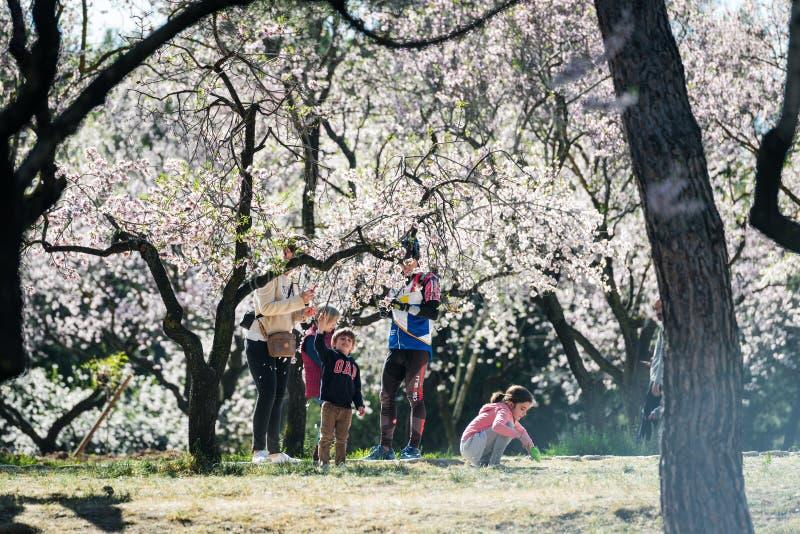 Αμυγδαλιές που ανθίζουν στο πάρκο Quinta de Los Molinos στη Μαδρίτη στοκ εικόνα με δικαίωμα ελεύθερης χρήσης