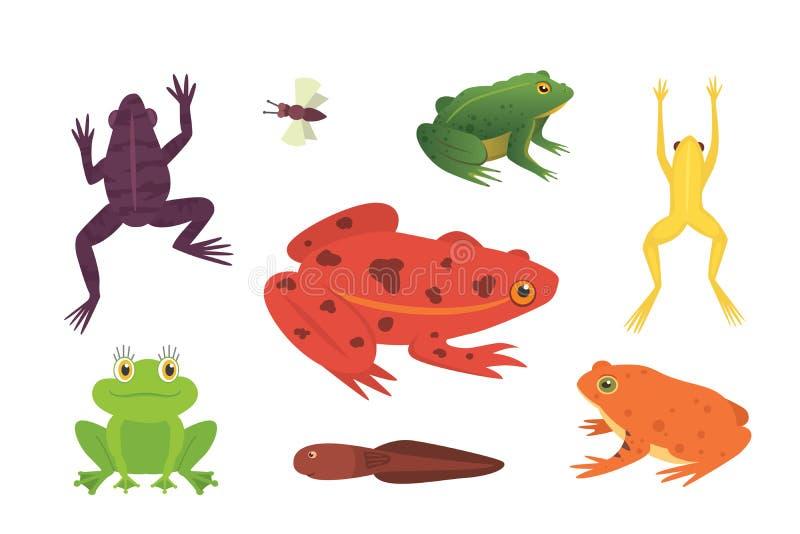 Αμφίβιο σύνολο PrintExotic Βάτραχοι στη διαφορετική διανυσματική απεικόνιση κινούμενων σχεδίων μορφών που απομονώνεται Τροπικά ζώ απεικόνιση αποθεμάτων