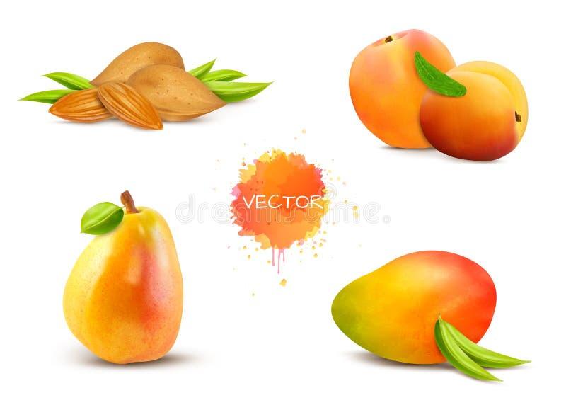 Αμύγδαλα, βερίκοκο, αχλάδι, μάγκο, ροδάκινο ελεύθερη απεικόνιση δικαιώματος