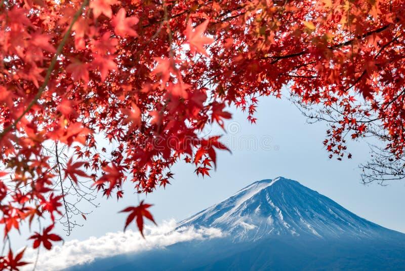 ΑΜ Φούτζι το φθινόπωρο πίσω από το κόκκινο δέντρο σφενδάμνου από τη λίμνη Kawaguchiko σε Yamanashi στοκ φωτογραφία