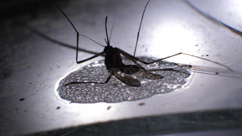 Ανάλυση κουνουπιών στοκ εικόνες με δικαίωμα ελεύθερης χρήσης