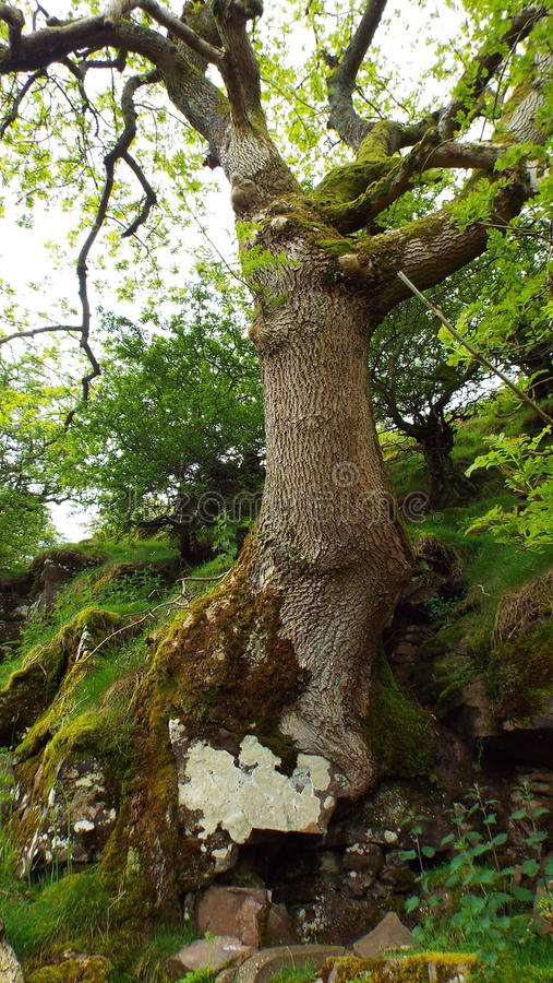 Ανάπτυξη δέντρων μέσω ενός παλαιού τοίχου στοκ εικόνα με δικαίωμα ελεύθερης χρήσης