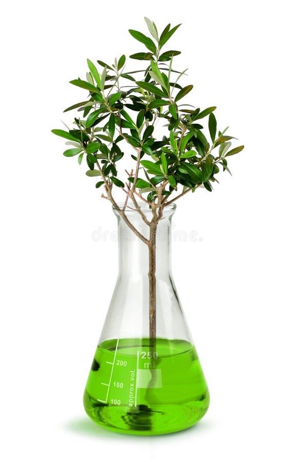 Ανάπτυξη δέντρων στην κούπα εργαστηριακών τεστ στοκ φωτογραφίες