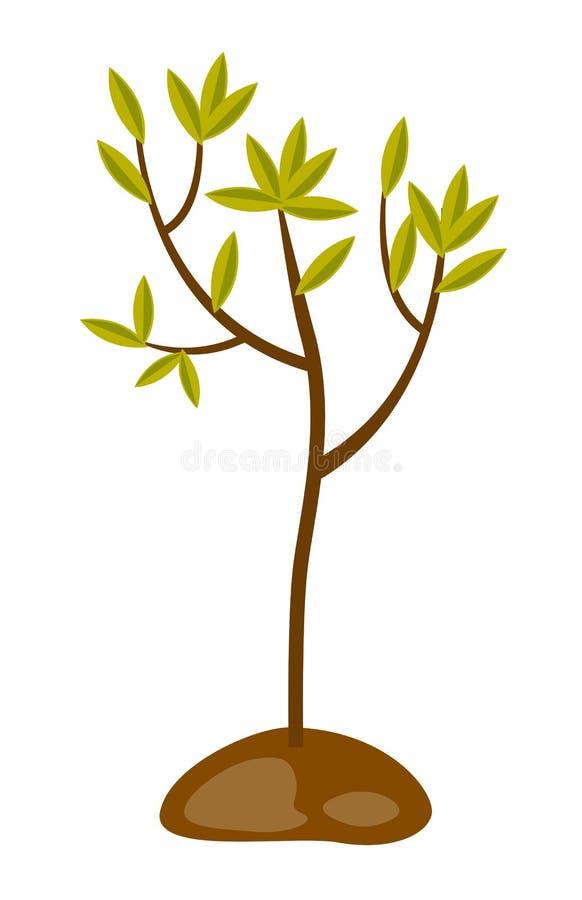Ανάπτυξη δέντρων στην εδαφολογική διανυσματική απεικόνιση διανυσματική απεικόνιση