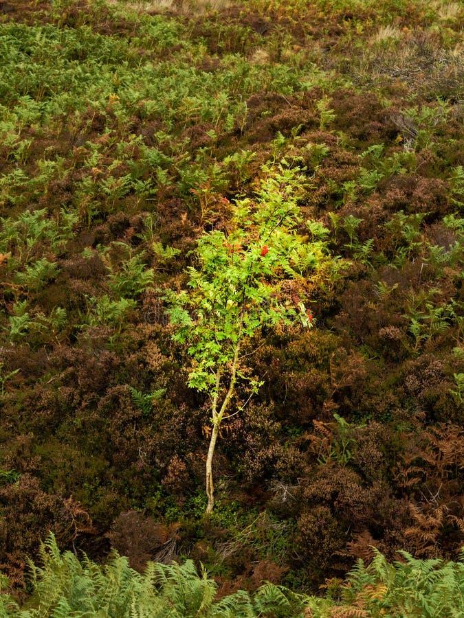 Ανάπτυξη δέντρων στη βουνοπλαγιά στοκ φωτογραφίες