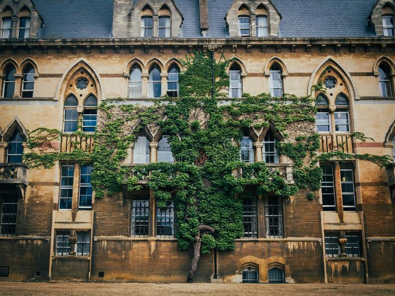 Ανάπτυξη δέντρων στον τοίχο του κτηρίου του κολλεγίου εκκλησιών Χριστού στην Οξφόρδη στοκ εικόνες με δικαίωμα ελεύθερης χρήσης