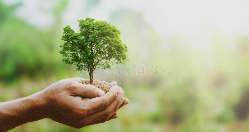 ανάπτυξη δέντρων χεριών holdig μεγάλη στο πράσινο υπόβαθρο με την ηλιοφάνεια στοκ εικόνα με δικαίωμα ελεύθερης χρήσης