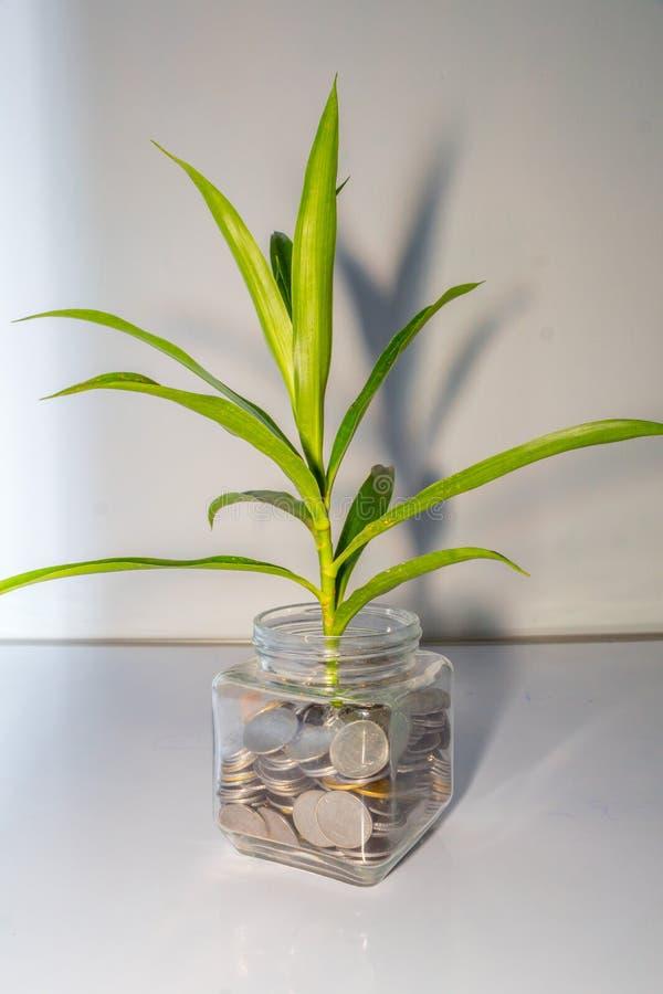Ανάπτυξη εγκαταστάσεων από τα νομίσματα σε ένα βάζο γυαλιού στοκ εικόνα
