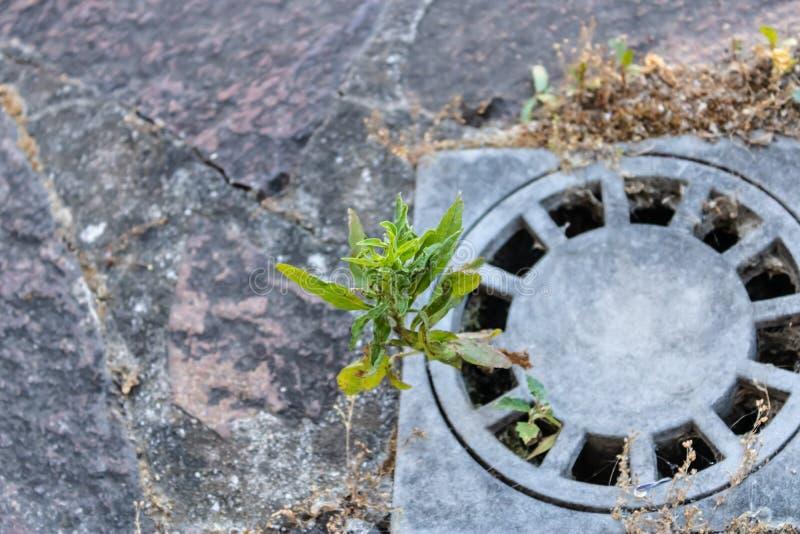Ανάπτυξη εγκαταστάσεων από τον αγωγό θύελλας οδών με τις πέτρες επίστρωσης στο υπόβαθρο, κινηματογράφηση σε πρώτο πλάνο σχαρών απ στοκ φωτογραφίες με δικαίωμα ελεύθερης χρήσης