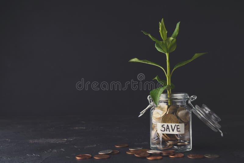 Ανάπτυξη εγκαταστάσεων στα νομίσματα στο βάζο γυαλιού στοκ φωτογραφίες με δικαίωμα ελεύθερης χρήσης