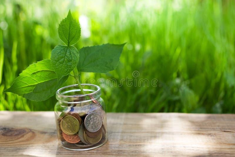 Ανάπτυξη εγκαταστάσεων στο βάζο γυαλιού νομισμάτων Νομίσματα αποταμίευσης χρημάτων έννοιας στοκ εικόνα με δικαίωμα ελεύθερης χρήσης