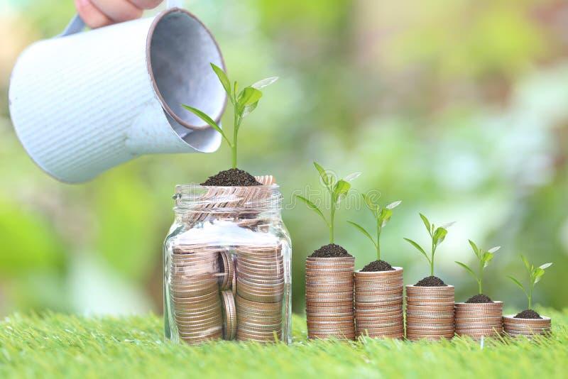 Ανάπτυξη εγκαταστάσεων στο σωρό των χρημάτων νομισμάτων και το μπουκάλι γυαλιού στο φυσικές πράσινες υπόβαθρο, τα επιτόκια και τη στοκ φωτογραφία με δικαίωμα ελεύθερης χρήσης
