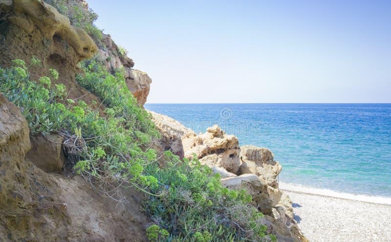 Ανάπτυξη εγκαταστάσεων Kritamos στους βράχους στο υπόβαθρο θάλασσας Έξοχο μάραθο θάλασσας τροφίμων Κρητικά χορτάρια για τις σαλάτ στοκ φωτογραφία