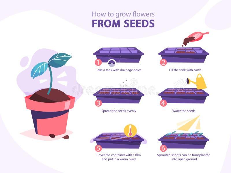 Ανάπτυξη ενός οδηγού εγκαταστάσεων Πώς να αυξηθεί ένα λουλούδι βαθμιαία απεικόνιση αποθεμάτων