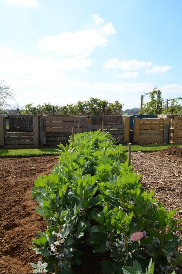 Ανάπτυξη λαχανικών έξω σε έναν κοινοτικό κήπο στοκ εικόνες