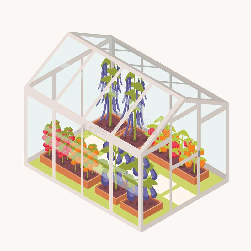 Ανάπτυξη λαχανικών στα κιβώτια με το χώμα μέσα στο θερμοκήπιο γυαλιού Isometric θερμοκήπιο με τα κρεβάτια κήπων για τις συγκομιδέ ελεύθερη απεικόνιση δικαιώματος