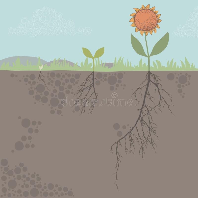 ανάπτυξη λουλουδιών απεικόνιση αποθεμάτων