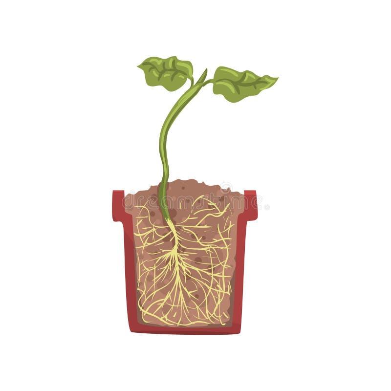 Ανάπτυξη πράσινων εγκαταστάσεων σε ένα δοχείο με το επίγειο χώμα, στάδιο της αύξησης, δοχείο σε μια διανυσματική απεικόνιση διατο διανυσματική απεικόνιση