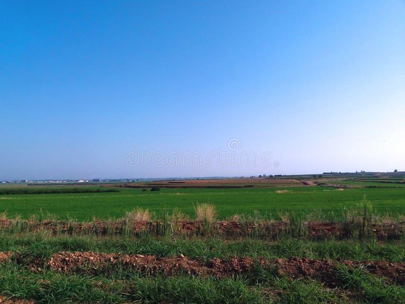 Ανάπτυξη ρυζιού στο καλλιεργήσιμο έδαφος στοκ φωτογραφία