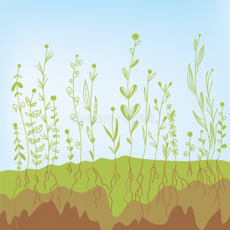 Ανάπτυξη χλόης με τις ρίζες στο χώμα απεικόνιση αποθεμάτων