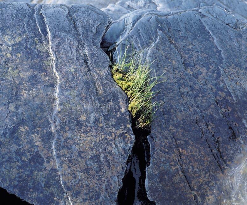 Ανάπτυξη χλόης από διασπασμένος στο βράχο στοκ εικόνες