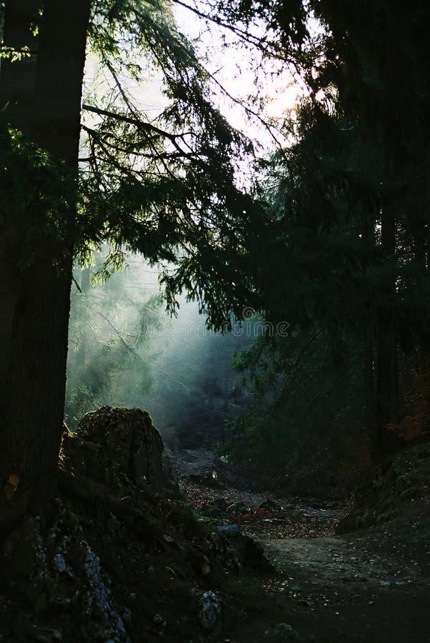 Download ανάψτε το μονοπάτι στοκ εικόνα. εικόνα από ancientness, σκοτεινός - 81579