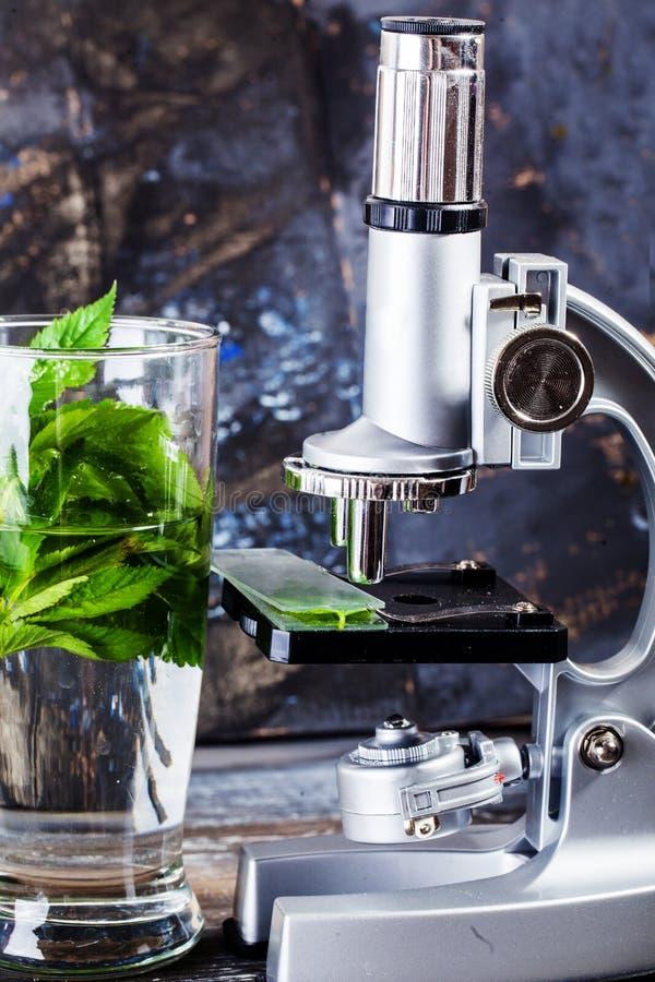 Ανάλυση μελέτης επιστημόνων ερευνητικής επιστήμης μικροσκοπίων που αναλύει την οικολογία της βιολογίας οργανική στοκ φωτογραφία