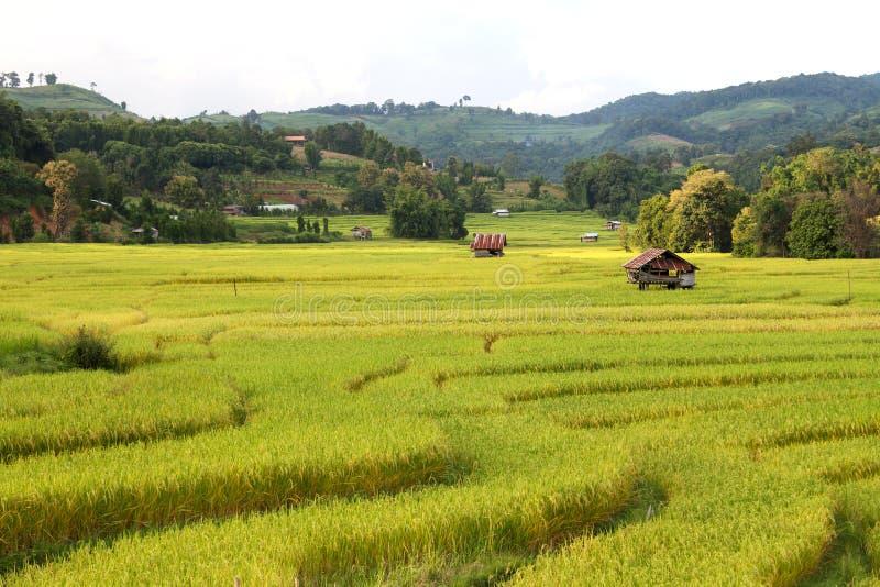 Αναβαθμίδες ρυζιού στην κοιλάδα στοκ φωτογραφίες με δικαίωμα ελεύθερης χρήσης