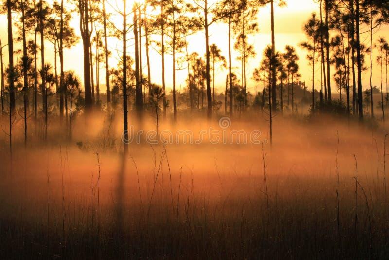 Αναδρομικά φωτισμένη ομίχλη στην ανατολή, εθνικό πάρκο Everglades στοκ εικόνες με δικαίωμα ελεύθερης χρήσης