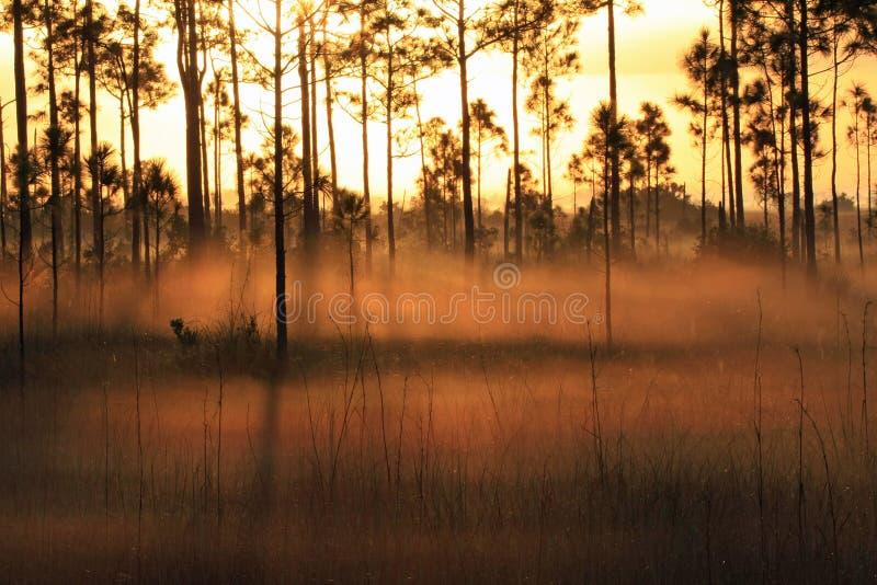 Αναδρομικά φωτισμένη ομίχλη στην ανατολή, εθνικό πάρκο Everglades στοκ φωτογραφία με δικαίωμα ελεύθερης χρήσης