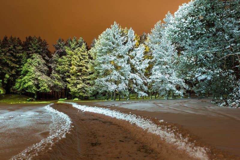 Αναμμένο δάσος στοκ φωτογραφίες