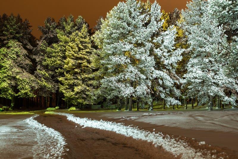 Αναμμένο δάσος στοκ εικόνες με δικαίωμα ελεύθερης χρήσης