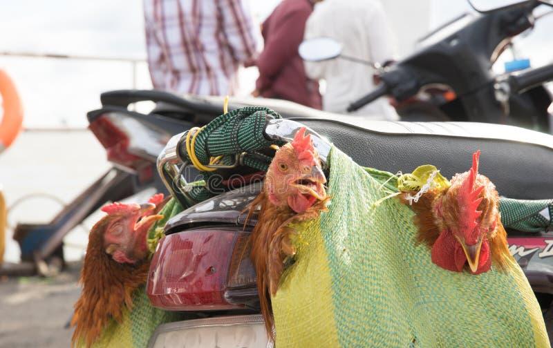 Αναμνηστικά κοτόπουλου στο πορθμείο σε Saigon στοκ φωτογραφία