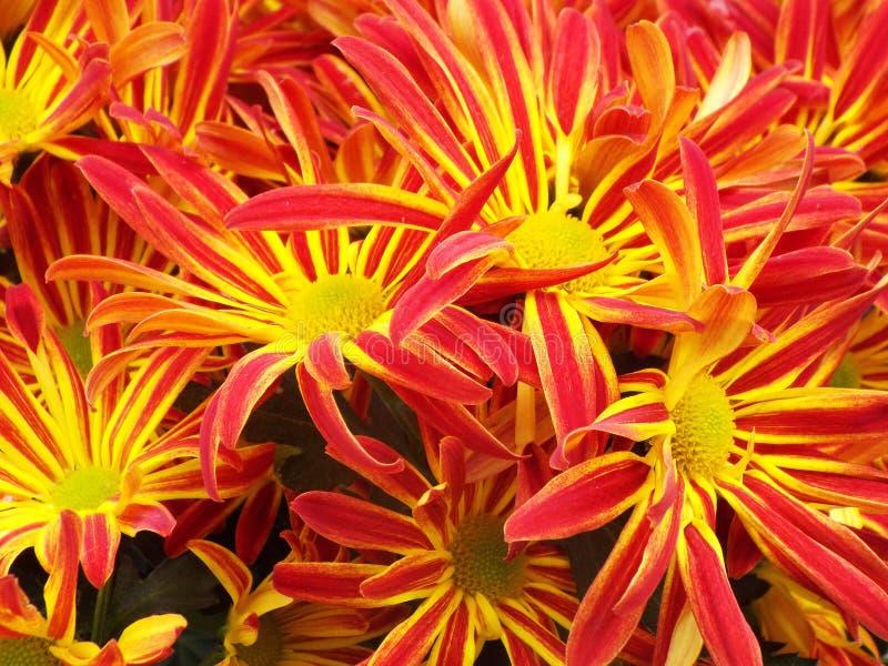 Αναμνηστικά λουλούδια στο νεκροταφείο για να τιμήσει και να θυμηθεί τους αγαπημένους αυτούς μας στοκ εικόνα με δικαίωμα ελεύθερης χρήσης