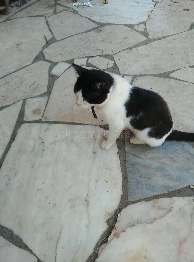 Αναμονή γατών στοκ φωτογραφίες με δικαίωμα ελεύθερης χρήσης