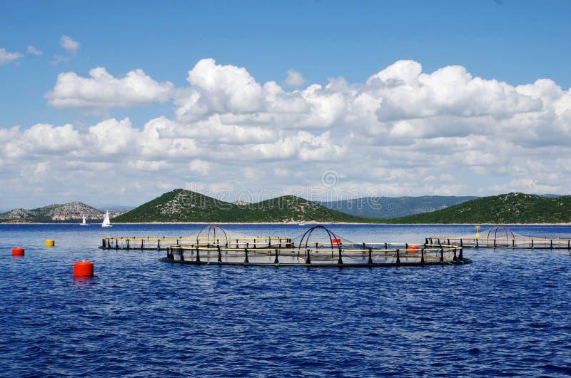 Αναπαραγωγή ψαριών ικανότητας στοκ εικόνα με δικαίωμα ελεύθερης χρήσης