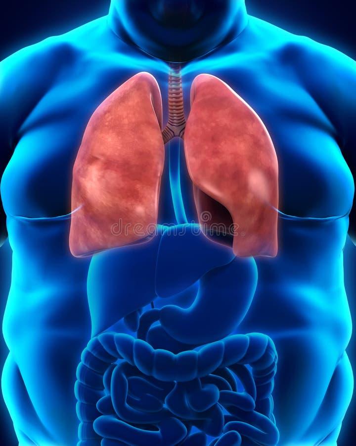 Αναπνευστικό σύστημα του υπέρβαρου σώματος διανυσματική απεικόνιση