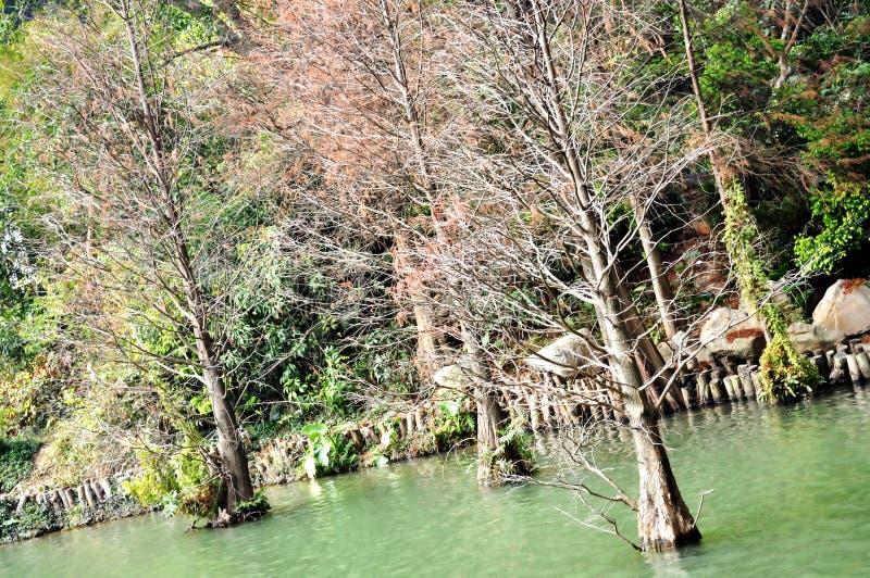αναπτύξτε το ύδωρ δέντρων στοκ φωτογραφία με δικαίωμα ελεύθερης χρήσης
