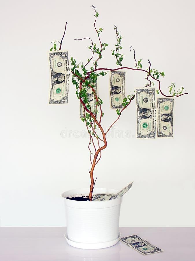 αναπτύσσει τα δέντρα χρημάτων στοκ φωτογραφίες