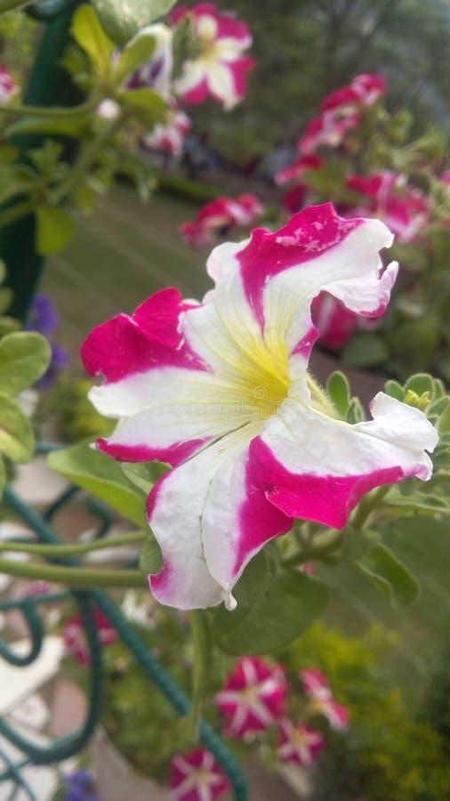 Αναπτύσσοντας λουλούδι στοκ φωτογραφία με δικαίωμα ελεύθερης χρήσης