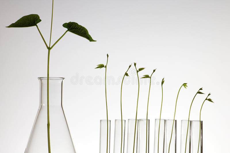 αναπτύσσοντας φυτό στοκ φωτογραφίες με δικαίωμα ελεύθερης χρήσης