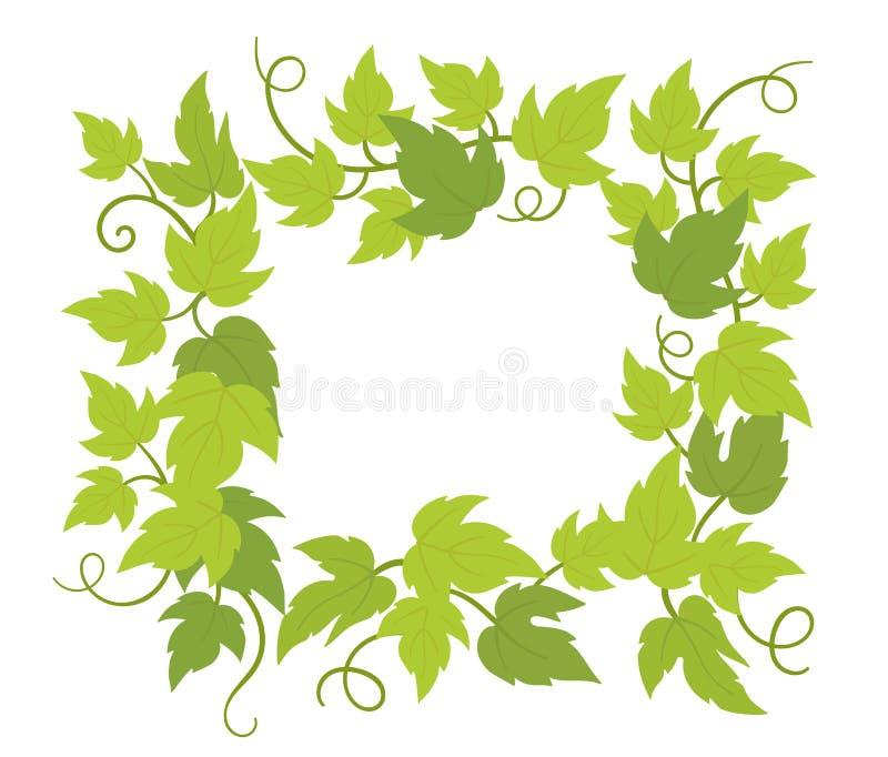 Αναρρίχηση του τετραγώνου πλαισίων εγκαταστάσεων Πλαίσιο συνόρων r Πράσινα φύλλα μπουκλών r απεικόνιση αποθεμάτων