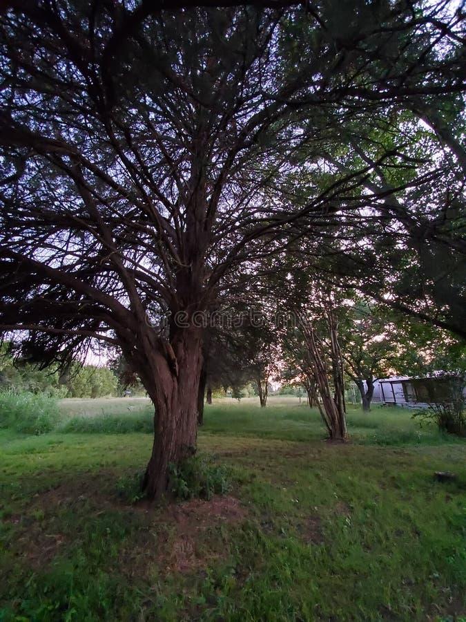 Αναρριχηθείτε στο δέντρο στοκ φωτογραφίες