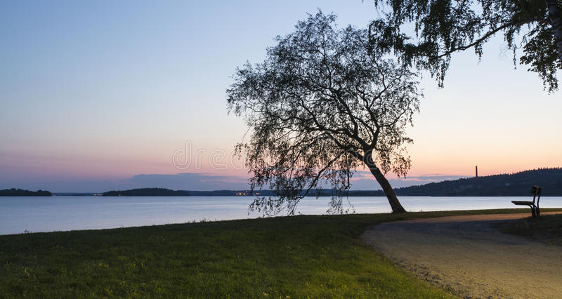 ανασκόπησης άνευ ραφής καλοκαίρι νύχτας σχεδίου floral σας στοκ φωτογραφία με δικαίωμα ελεύθερης χρήσης